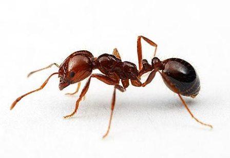 Uništavanje mrava 1