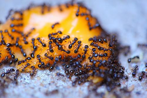 Uništavanje mrava 2