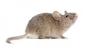 Uništavanje miševa 2