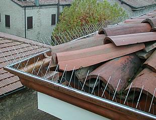 Šiljci za golubove