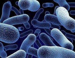 dezinfekcija bakterija
